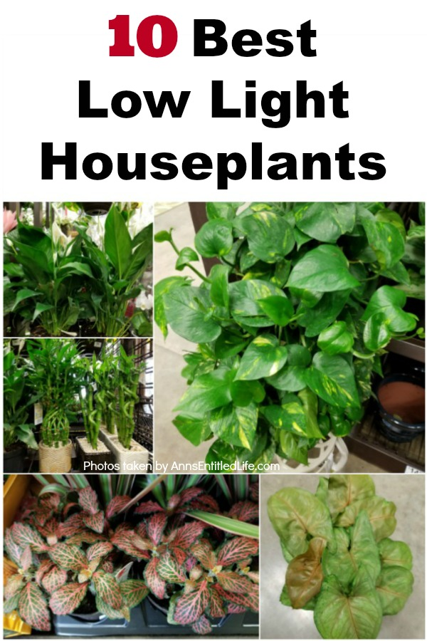 assortment of low light houseplants in a collage