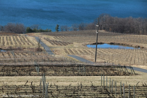 Estate Wineries on Seneca Lake