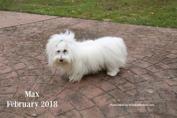 Chemo Round 2 For Max. Max's GME Update. This is an update of the chemotherapy protocol of our dog, Max who is battling Granulomatous meningoencephalomyelitis (GME). This is a canine disease where the white blood cells attack the central nervous system.