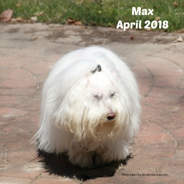 Chemo Round 4 For Max. Max's GME Update. This is an update of the chemotherapy protocol of our dog, Max who is battling Granulomatous meningoencephalomyelitis (GME). This is a canine disease where the white blood cells attack the central nervous system.