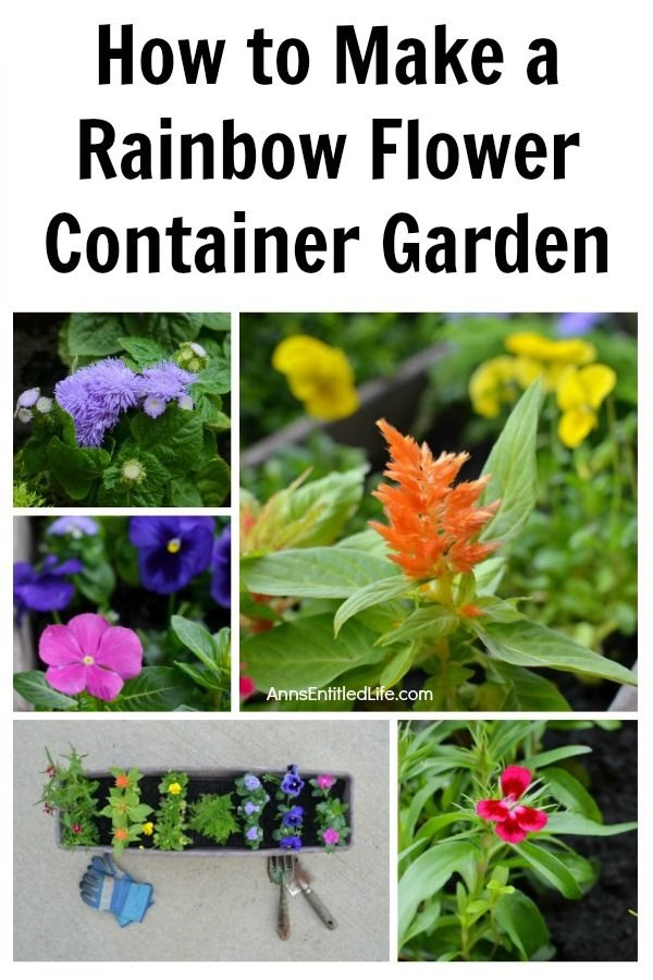 How to Make a Rainbow Flower Container Garden. Small space flower container gardening does not have to be boring. Create a beautiful rainbow flower container garden to sit on your patio, window box, or three-season room. This post gives step-by-step detailing what flowers to plant, and how to grow a beautiful rainbow flower container garden!