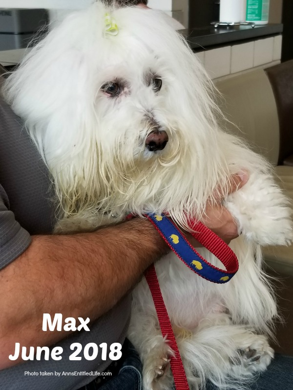 Chemo Round 6 For Max. Max's GME Update. This is an update of the chemotherapy protocol of our dog, Max who is battling Granulomatous meningoencephalomyelitis (GME). This is a canine disease where the white blood cells attack the central nervous system.