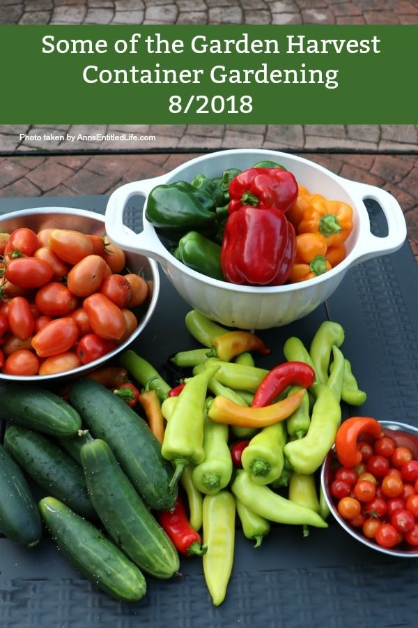 Container Garden Harvest. This is a post to recap my 2018 container gardening harvest including; what worked, what did not work, and what I will be trying again.