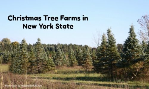 Christmas Tree Farms in New York State