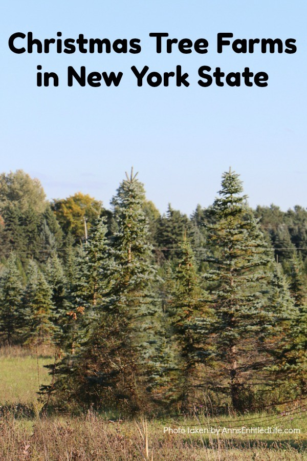 Christmas Tree Farms in New York State. The state of New York is one of the best locations for finding amazing Christmas Tree Farms for cutting your own holiday tree.  There are many great farms that are ideal for taking your family along for a fun holiday adventure. Build a great new family tradition by planning a weekend to visit one of the many amazing Christmas Tree farms located throughout New York State.