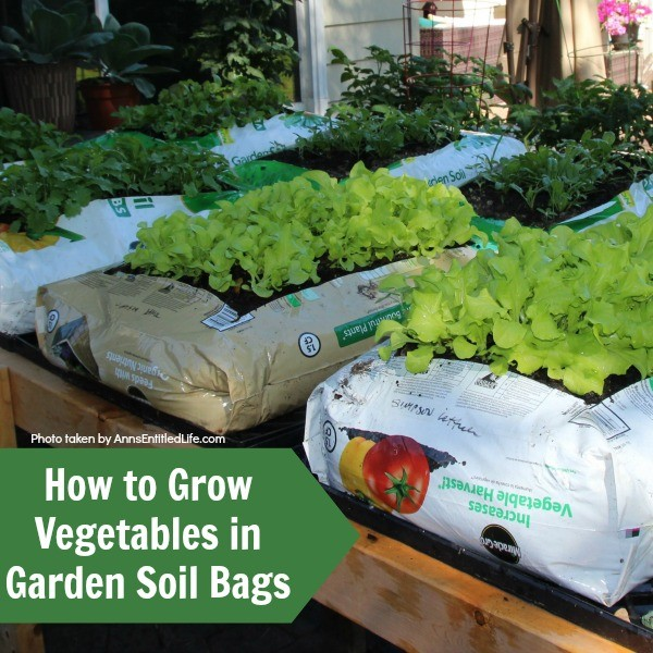 How to Grow Vegetables in Garden Soil Bags. Learn how to grow vegetables in soil bags eliminating the need for garden planters or in-ground planting. Grow your vegetables from seed, and have fresh vegetables all summer long with very little gardening work!