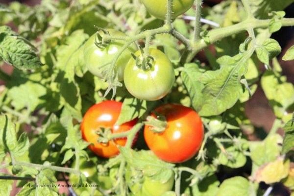 7 Things to Add to Your Tomato Planting Hole. To ensure you grow the best tomatoes when it comes to size and taste, you need to nourish it from the very beginning. Adding these seven things straight into the tomato planting hole helps to give your tomatoes a great head start towards a bountiful harvest.