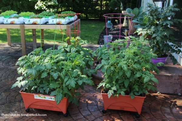 7 Things to Add to Your Tomato Planting Hole. Tomatoes are the pride of your vegetable garden. To ensure healthy plants that will generate a great tomato harvest at the end of the growing season, use these tips of 7 things to add to your tomato planting hole and give your tomatoes a great start on a spectacular growing season and bountiful harvest!