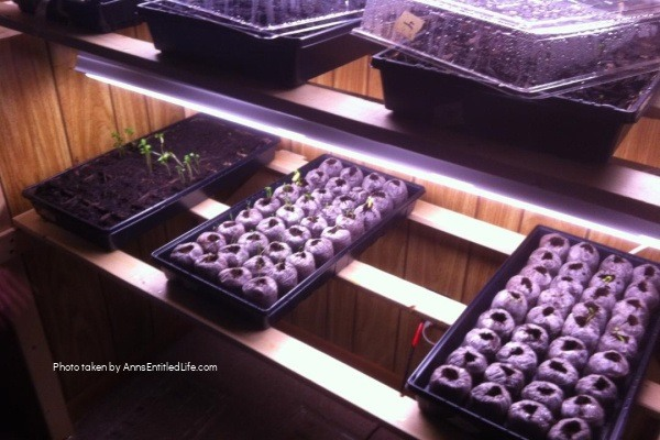 How to Grow Garden Seedlings Indoors. Start your gardening seeds indoors, in soil, bags of peat, and plastic bags! Step-by-step instructions on how to start garden seedlings indoors so they are ready to plant in your growing zone!