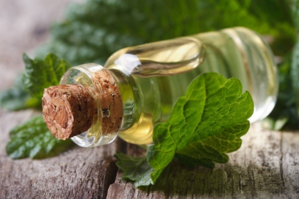 Why You Need Lemon Balm In Your Garden. Uses for lemon balm in your home, garden, beauty routine, cooking, and baking - as well as lemon balm recipes, and why you need lemon balm in your garden.