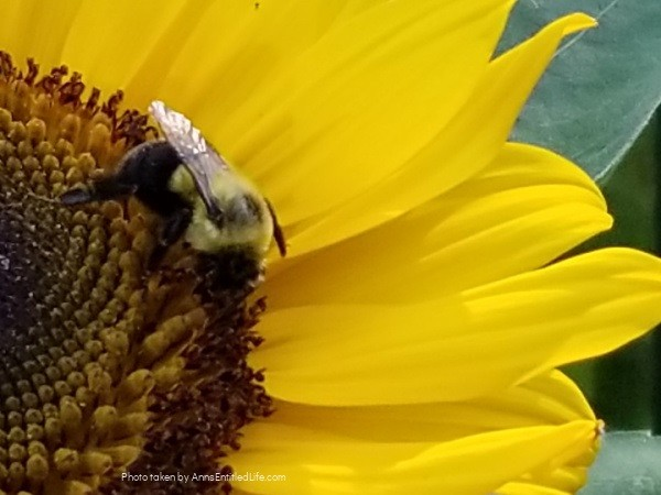 How to Attract Bees to Your Garden. Bees play an important role in the world's ecosystem. From honey to pollination there are many benefits to attracting several species of bees to your flower garden and vegetable garden. Learn how to cultivate a bee garden with this comprehensive tutorial.