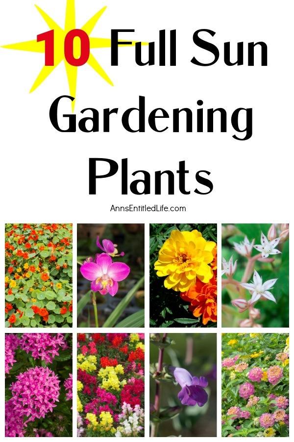 collage of full sun plants