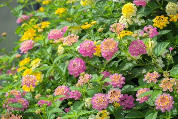10 Full Sun Gardening Plants. Full sun annuals, full sun flowers for pots, full sun flowers that bloom all summer long; if you have a lot of sunlight in your garden or on your patio, you might be interested to learn what full sun plants are best for your area. From late spring to early fall, from full sun perennials to full sun plants for pots, if you have a sunny spot in your garden, there is something on this list of full sun gardening plants for every hardiness zone and state.