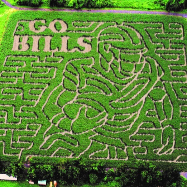 New York State Corn Mazes List 2021. Have some great outdoor family fun this fall at a New York State corn maze!! Whether you are looking to spend the day in a corn maze, for a fright night scream, or corn mazes by moonlight, there is something for everyone on this list of 2021 New York State Corn Mazes!